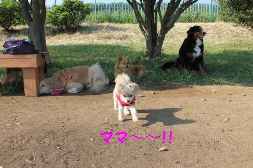2010_0603画像0149