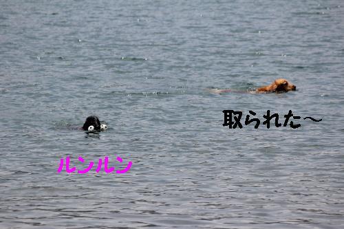 2010_0612画像0015