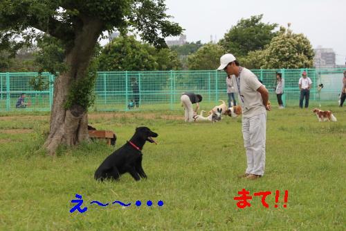 2010_0613画像0002