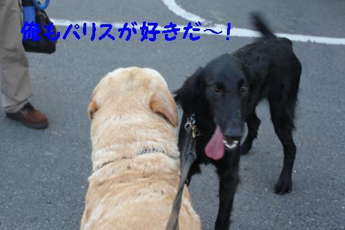 2010_0617画像0007