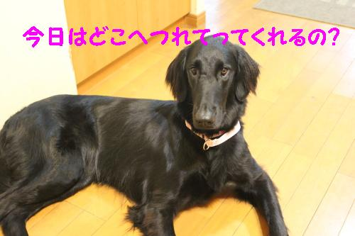 2010_0619画像0001