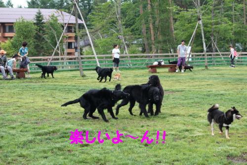 2010_0619画像0032