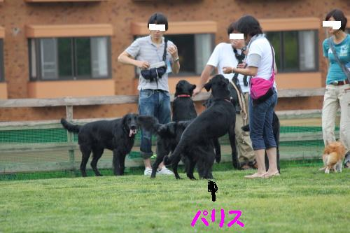 2010_0619画像0035