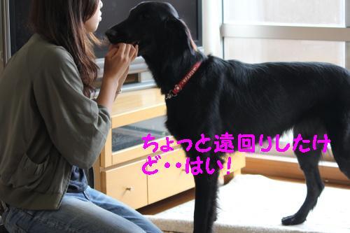 2010_0622画像0005