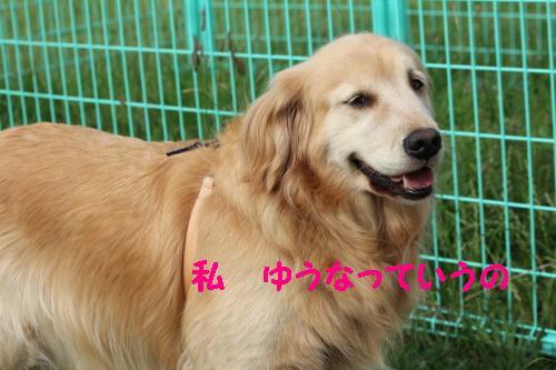 2010_0624画像0004