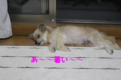 2010_0630画像0003