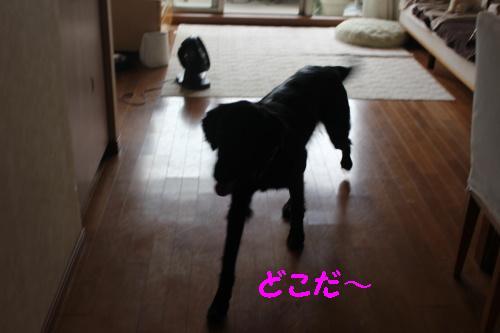 2010_0709画像0004