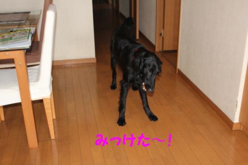2010_0709画像0005