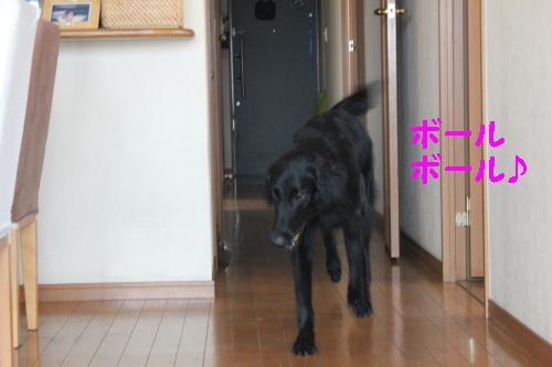 2010_0724画像0004