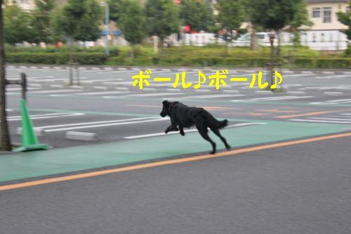2010_0815画像0011