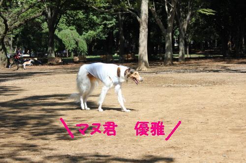 2010_0926画像0007