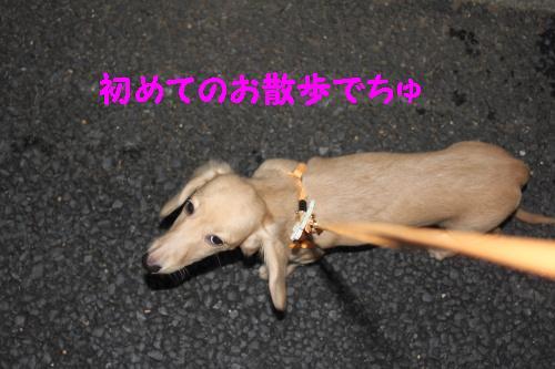 2010_1024画像0004