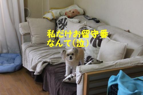 2010_1024画像0034