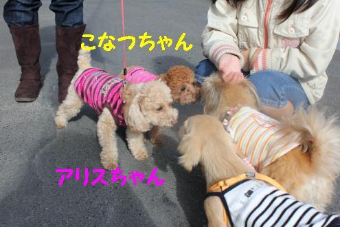 2010_1121画像0005