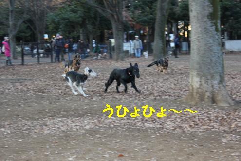 2010_1218画像0004