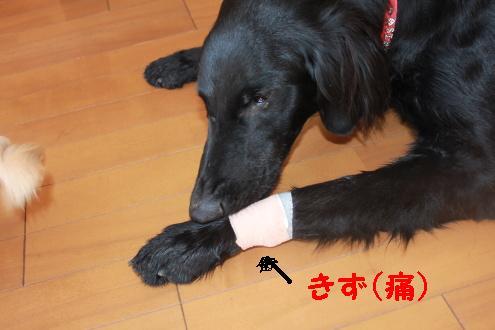 2011_0108画像0006