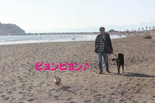 2011_0109画像0006