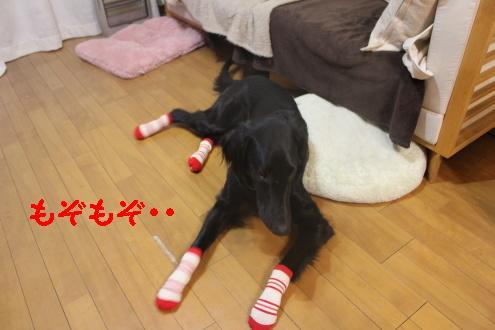 2011_0117画像0003