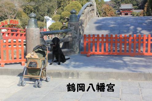 2011_0129画像0001
