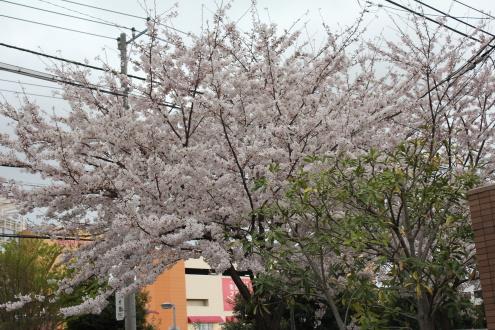 2011_0409画像0018