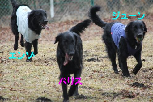 2011_0410画像0009