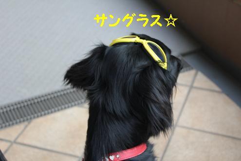 2011_0416画像0003