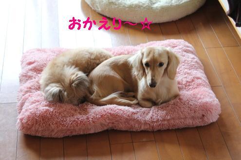 2011_0419画像0001