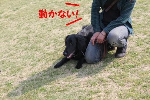 2011_0426画像0004