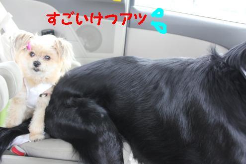 2011_0503画像0001