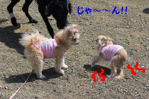 2011_0508画像0004