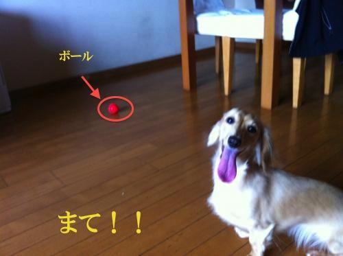 IMG_0473_convert_20110731154936.jpg