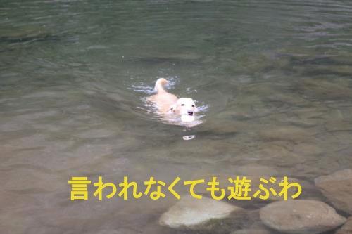 IMG_2970_convert_20110709195151.jpg