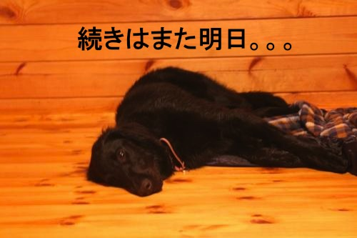 IMG_3109_convert_20110724171558.jpg