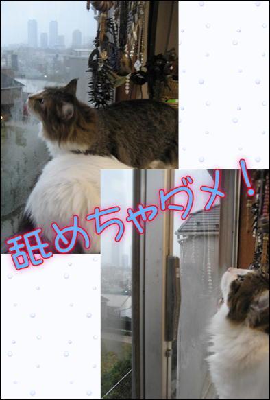 朝日&猫 032