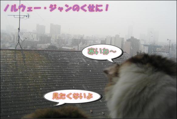 初雪 003