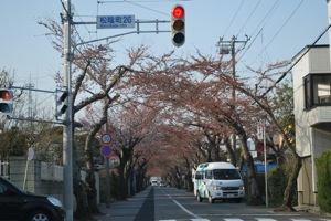 函館市桜ヶ丘通り