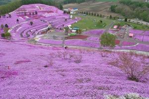 大空町東藻琴の芝桜公園