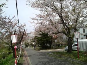 室蘭市富士下桜並木