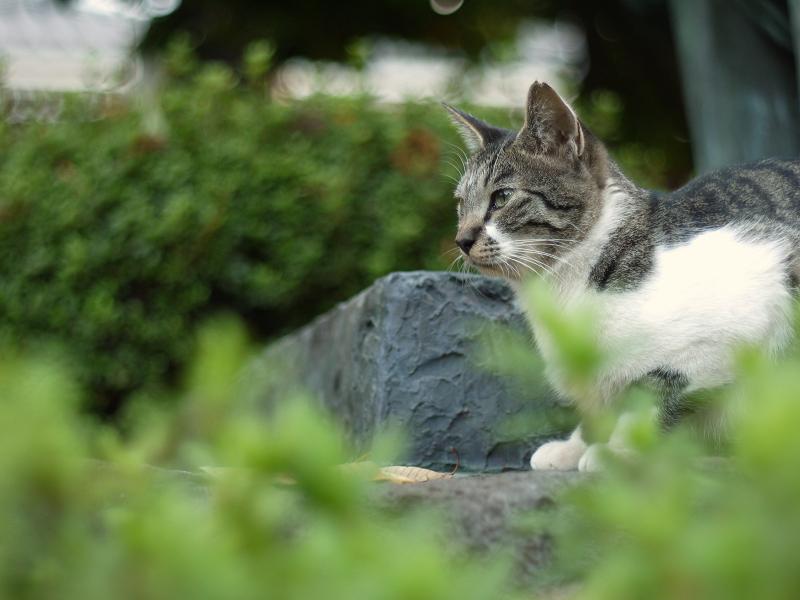 大人びた表情のネコ