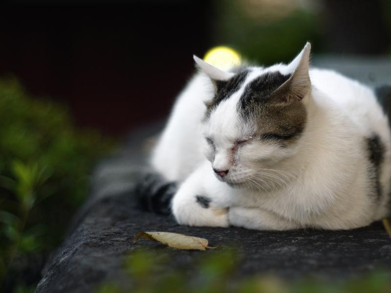 岩の上に佇むネコ