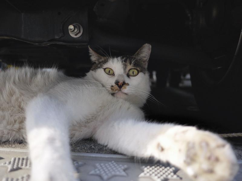 車の下から見てるネコ