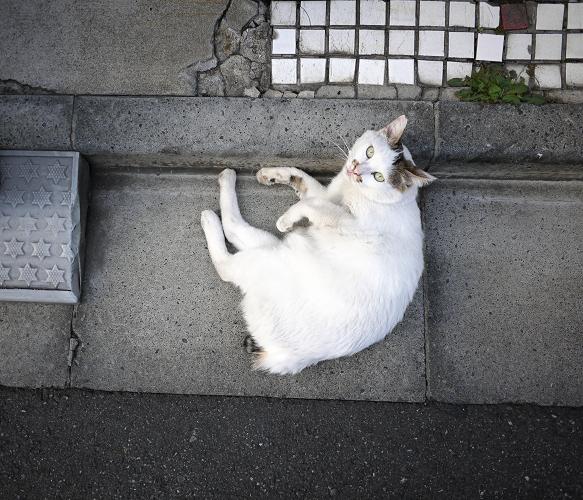 縁石で見上げるネコ