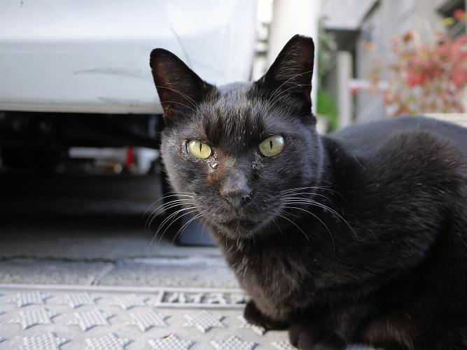 ジーッと見つめる黒猫