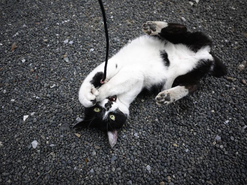 ネズミに夢中ネコ