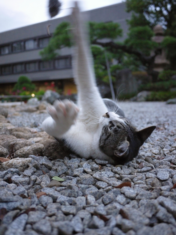 ネズミに手を伸ばすネコ
