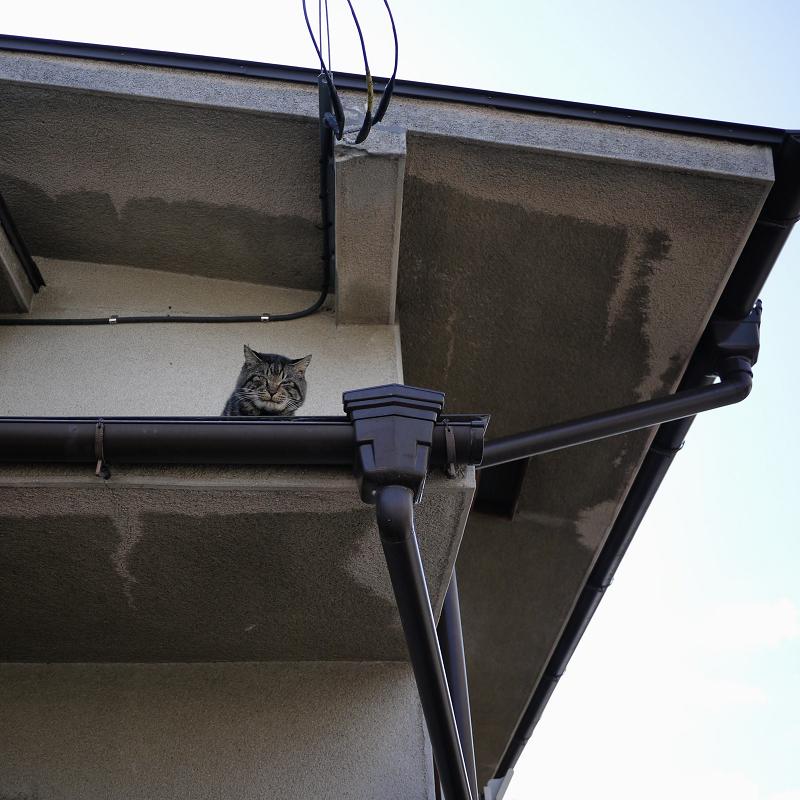 民家のひさしにいたネコ