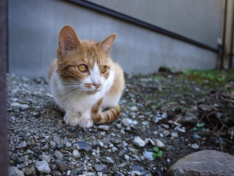 民家の庭先にいたネコ1