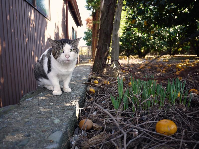 みかん園にいたネコ