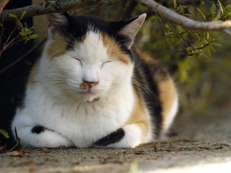 茂みの三毛猫2