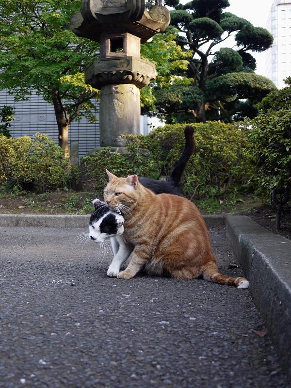 駐車場も仲良し猫